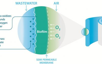 Biofilm Enables Streamlining of Wastewater Treatment
