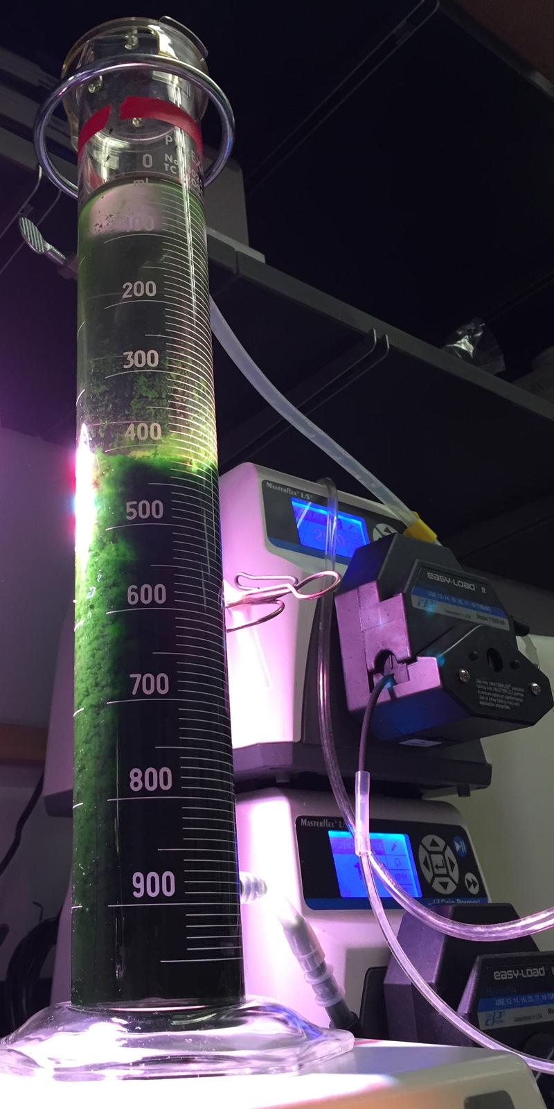 Drexel algae bioreactor