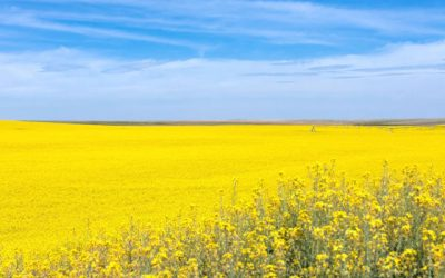 Growing Cool-Season Crops Could Save California Water