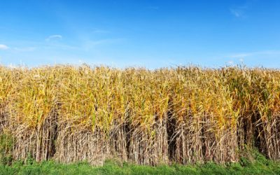 Study Examines Anaerobic Digestion's Role in Water, Agriculture, and Biofuels Issues