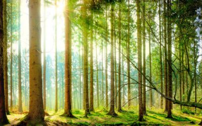Forests Worldwide at Risk of Dying Due to Drought