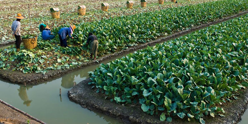 Wastewater Use in Irrigation Higher Than Thought | Fluence
