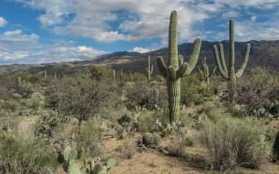 Arizona Removing Obstacles to Wastewater Recycling
