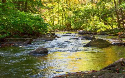 Study: Organic Substances in Surface Waters Complex, Potentially Harmful