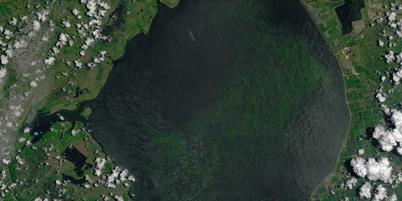 New Study Links Septic Tanks to Florida Algal Blooms