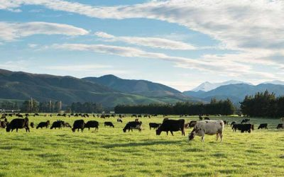 New Zealand Facing Water Pollution Crisis