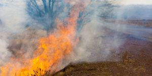 Groundwater Depletion and Wildfires