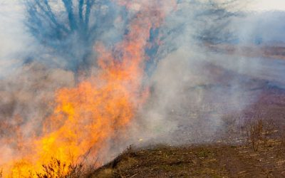 Wildfires Linked to Groundwater Depletion