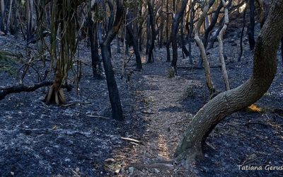 Australian Wildfires and Water Supplies