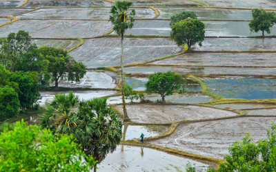 Mekong Delta Faces Saline Intrusion Crisis