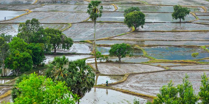 Campo de arroz en An Giang, Vietnam