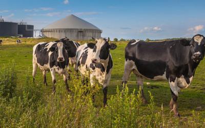 Biogas Adoption Grows in Europe
