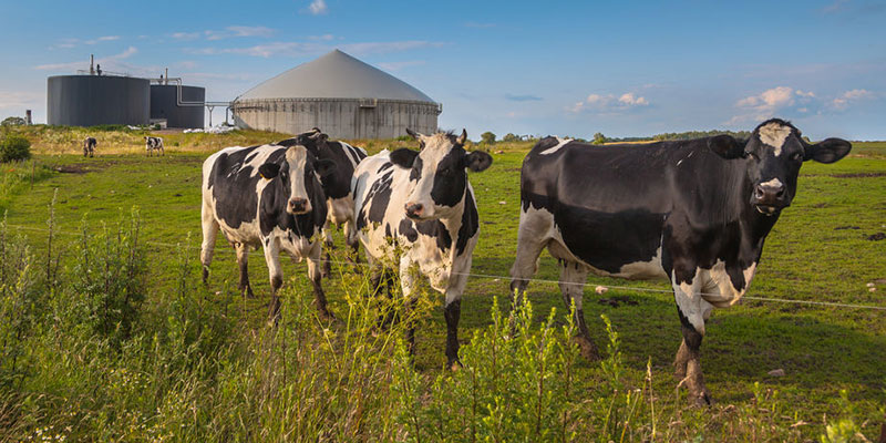 Dairy Industry Anaerobic Digestion