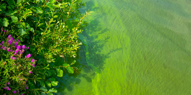 Color Changes Can Reflect Health of Water Bodies