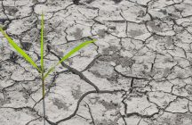 Parched Agricultural Field