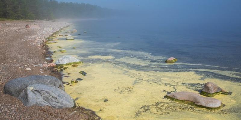 Floración de Algas Tóxicas