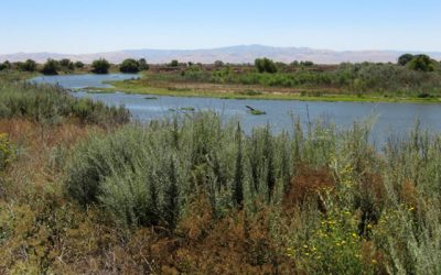 The Opportunity for Municipal-Agricultural Water Partnerships in California